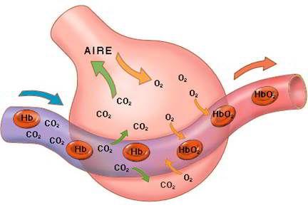 oxigeno terapia